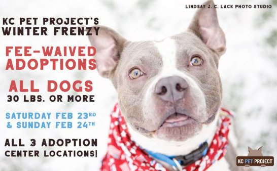 Adopt Your New Best Friend This Winter Frenzy